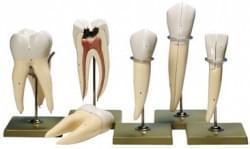 Zuby a čelist