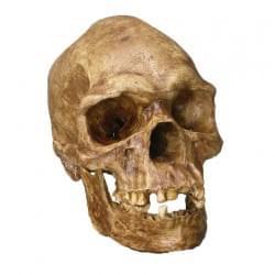 Fosílie a kosti člověka