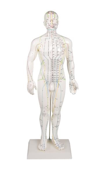 Mužská figurína pro akupunkturu, 50 cm