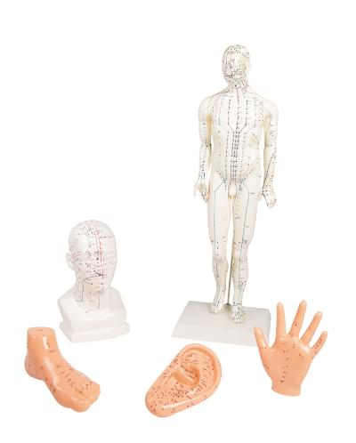 Sada modelů pro akupunkturu