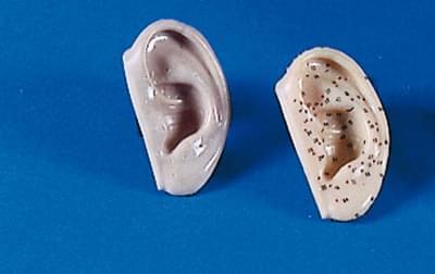 Modely uší pro akupunkturu