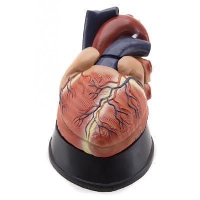 GD0321 – Srdce, cca 2,5× zvětšené, 6 částí