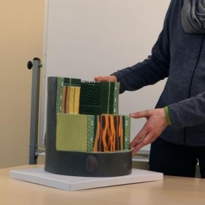Model stonku dvouděložní rostliny