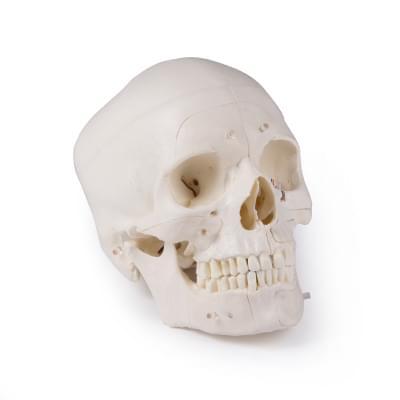 4800 - Lebka DELUXE - 14 částí