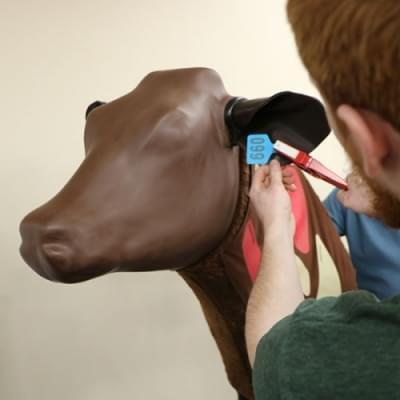 Náhradní ucho pro Kráva - injekční simulátor (10 párů)