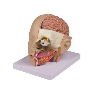 C250 - Model hlavy, 4 části