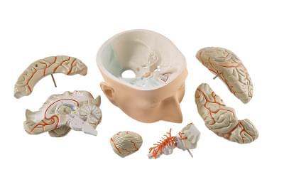 C320 - Hlava s mozkem, 7 částí