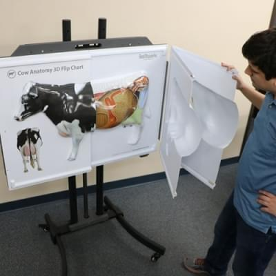 Anatomie krávy - 3D Flip chart