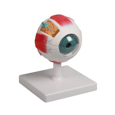 F210 - Model oka, 4× zvětšený, 6 částí