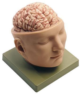 BS5 - Hlava se spodinou lebeční