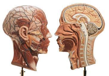BS 9 - Polovina hlavy