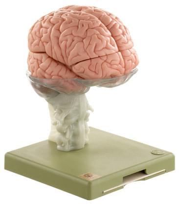 BS 25 - Mozek - 15 částí