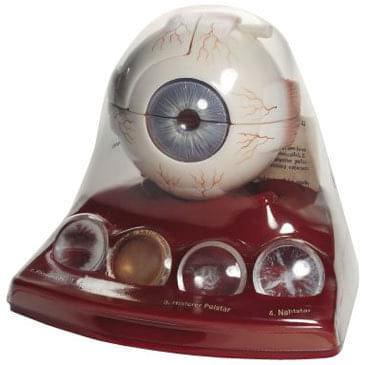 CS 22 - Model šedého očního zákalu