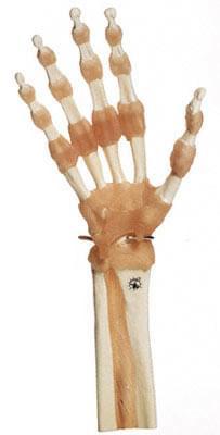 NS 55 - Praktický model ruky a kloubů prstů