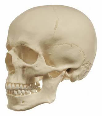QS 10/6+9 - Umělá kostra člověka