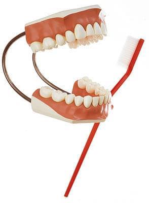 ES 22 - Model zubů - set