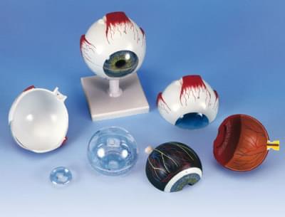 F10 - Model oka, 5× zvětšeno, 6 částí