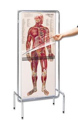 """""""Průhledný muž"""" - sekvenční anatomie člověka"""
