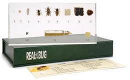Život včely medonosné – Apis cerana