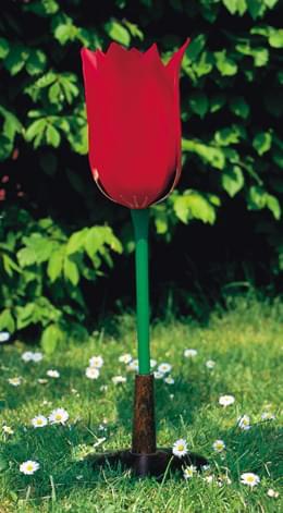 Tulipán zahradní (Tulipa gesneriana)
