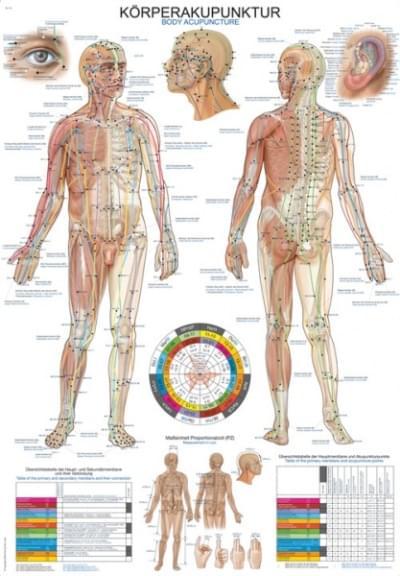 Nástěnné schéma akupunkturních bodů, 50 × 70 cm