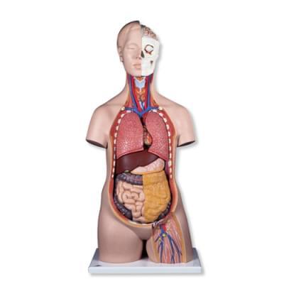 B09 - Klasické torso, unisex, 12 částí