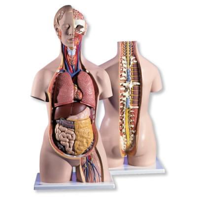 B19 - Klasické torso s otevřeným krkem a otevřenými zády, unisex, 18 částí
