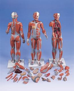 B56 - Kompletní ženská postava se svaly, 21 částí