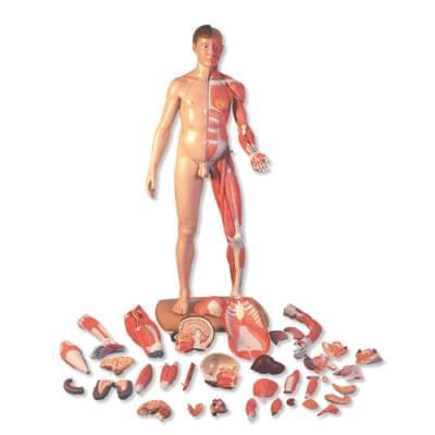 B52 - Postava se svaly v životní velikosti, asijské rysy, dvojí pohlaví, 39 částí