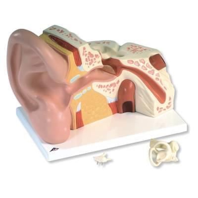 VJ513 - Velký model ucha, 5 krát zvětšený, 3 části