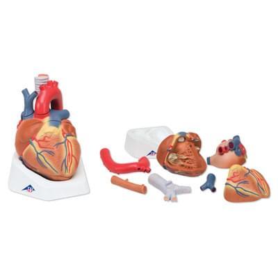 VD253 - Model srdce, 7 částí