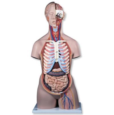 B17 - Klasické torso s otevřenými zády, unisex, 21 částí