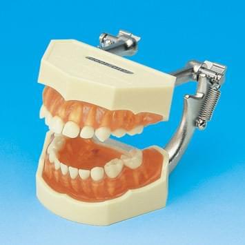 Model s odnímatelnými zuby – mléčný chrup (dáseň z transparentního růžového silikonu)