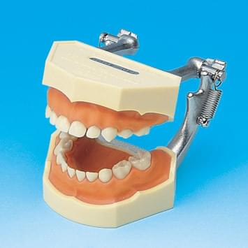 Model s odnímatelnými zuby – mléčný chrup (dáseň z růžového silikonu)