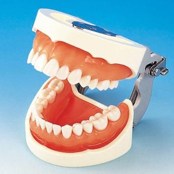 Model čelisti s protetickou náhradou (28 zubů) - dáseň pro silikonový otisk