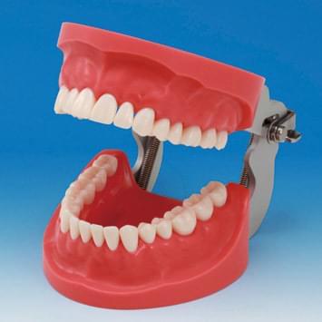 Model čelistí pro tvorbu zubních náhrad CON2001-UL-HD (32 zubů)