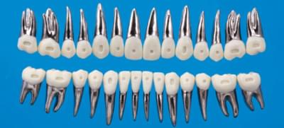 Anatomický model zubu B9-500D (sada 28 zubů)