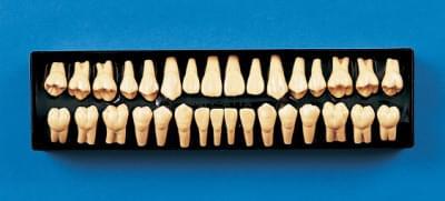 2× zvětšený model zubu C12-AT.1A (sada 32 zubů)