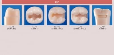 Model zubu pro přípravu pilíře můstku a čištění zubu před výplní (zub č. 37)