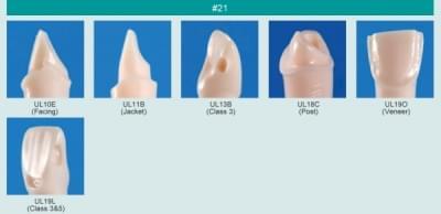 Model zubu pro přípravu pilíře můstku a čištění zubu před výplní (zub č. 21)