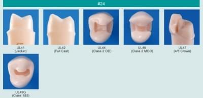 Model zubu pro přípravu pilíře můstku a čištění zubu před výplní (zub č. 24)