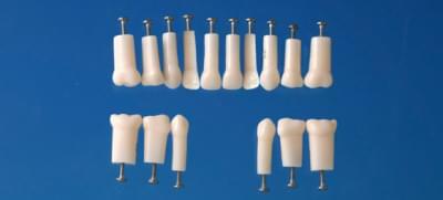 Model mléčného zubu s jednoduchým kořenem (zub č. 74)