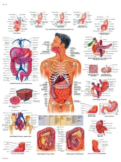 VR1422L - Gastrointestinální systém