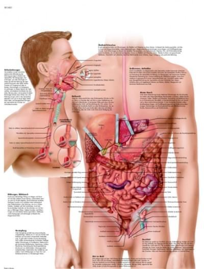 VR1431L - Nemoci trávicí soustavy