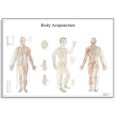 VR1820L - Tělová akupunktura