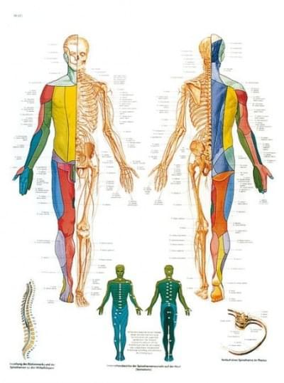 VR1621L - Páteřní nervy