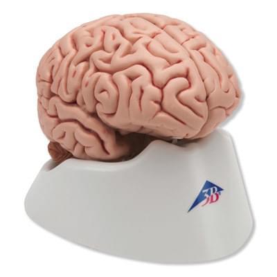C18 - Klasický mozek, 5 částí