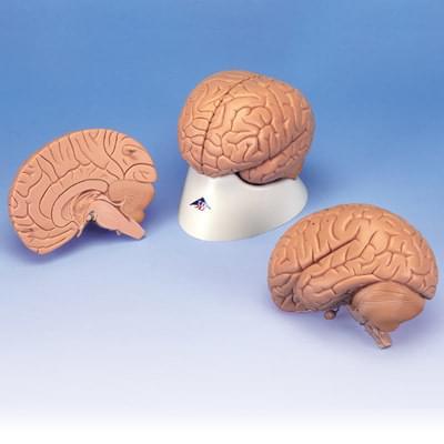 C15/1 - Úvodní model mozku, 2 části