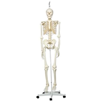 A10/1 - Model lidské kostry Stan – na závěsném stojanu s kolečky