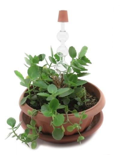 5666 – Sada pro ukázku tlaku v kořenech rostlin